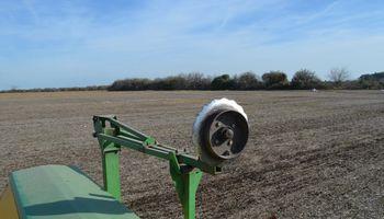 El trigo pisa fuerte y va por más hectáreas
