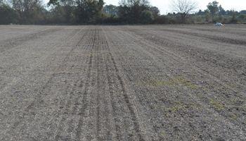 Mejoran las condiciones del tiempo para la siembra de trigo