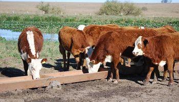 Desarrollan carne de mejor calidad integrando plantas autóctonas en la dieta