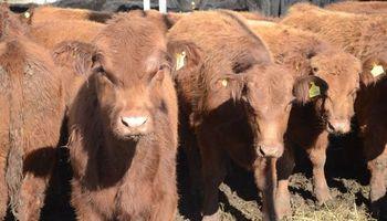 Sube la oferta de animales en el mercado de hacienda