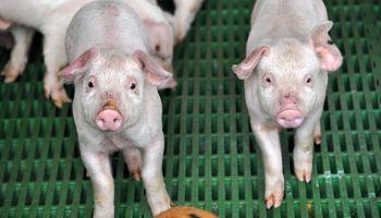 """Cerdos: """"los costos atentan con la competitividad"""""""