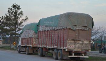 Refuerzan controles para evitar la dispersión del picudo del algodonero