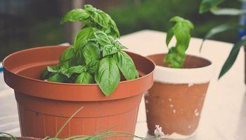 Fomentan el uso de plantas aromáticas para alcanzar una alimentación saludable