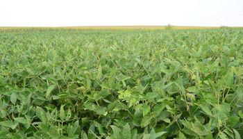El USDA reconoció una menor demanda de soja norteamericana