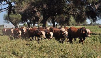 Buenos Aires: se puso en marcha la campaña de prevención enfermedades de transmisión sexual en bovinos