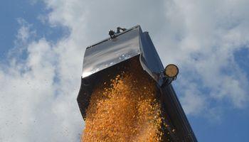 Chicago: pocos cambios en soja; cereales a la baja