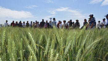 Trigo tolerante a sequía: consensos parciales a dos meses del pedido de Macri
