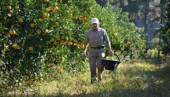 Frutihortícolas: establecen normativa sobre plagas no cuarentenarias reglamentadas