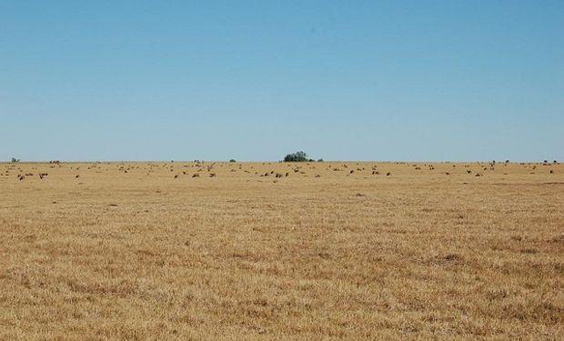 La sequía sigue afectando a Uruguay y declaran la emergencia en nuevas zonas