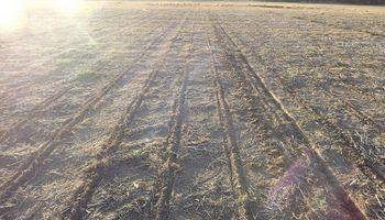 La siembra de soja mantiene un retraso interanual de 3 puntos