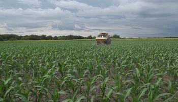 Fertilización en maíz: 4 preguntas que encontraron respuestas