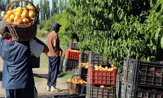 Carga impositiva: el 45 % del precio del durazno se lo lleva el Estado
