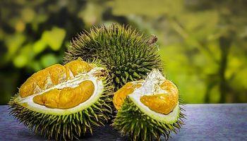 """Incluyen en el Código Alimentario al durian, la """"fruta más apestosa del mundo"""""""