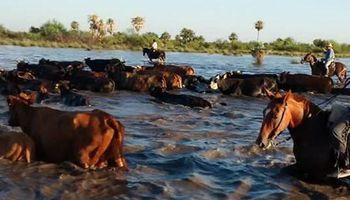 Campo solidario: ofrecen tierras para alojar animales afectados por las inundaciones
