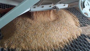 Los camiones escalados ganan protagonismo en la logística de la cosecha gruesa