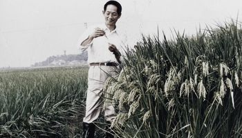 Murió Yuan Longping y China lo homenajeó por ser el padre del arroz híbrido