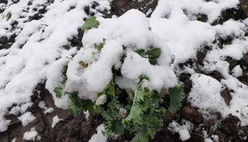 Nieve en Córdoba: el impacto sobre productores hortícolas y la advertencia para los próximos días