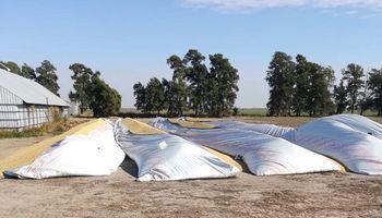 Delito rural: se suman nuevas roturas de silo bolsa y denuncian el robo de granos