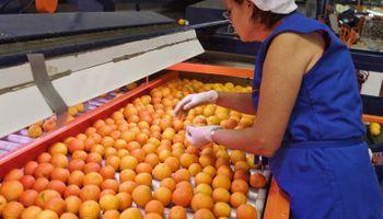 Economías regionales: buscan implementar fondos de garantía como nuevos instrumentos de financiamiento