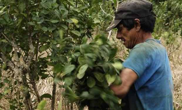 Varios de los principales productos de exportación argentinos sufrieron caídas entre enero y agosto, como la yerba, en un 45%.