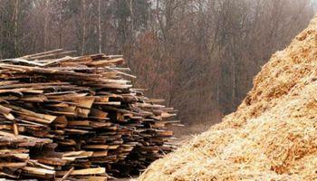 Economías regionales: subieron las exportaciones de madera y yerba y cayeron las de arroz y té