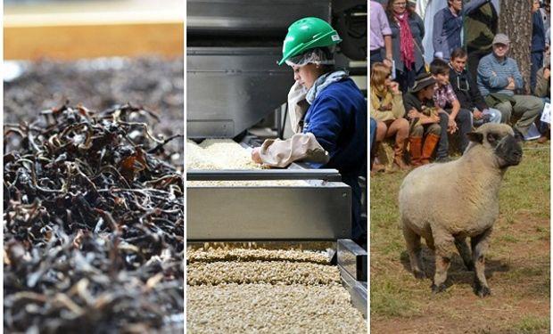Tres miradas sobre las economías regionales: la actualidad del té, la carne ovina y el maní