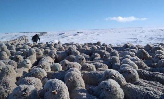 Declaran la emergencia agropecuaria en el sur del país por las fuertes nevadas