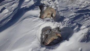 En imágenes: así es producir en el sur argentino durante la ola polar