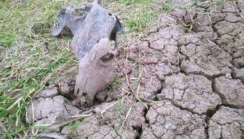 Las impresionantes imágenes de la sequía extrema que sufre Chaco
