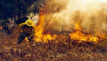 Estados Unidos aprobó un herbicida que ayudaría en la prevención de incendios forestales