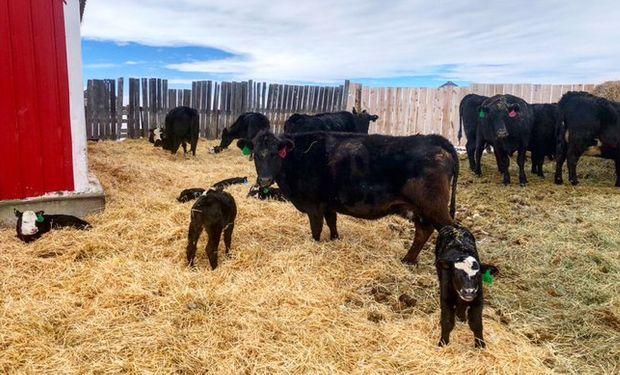 Denuncian que cuatro grandes empresas (Tyson Foods, JBS, Cargill y National Beef) manejan un 80% de la industria procesadora de carne.