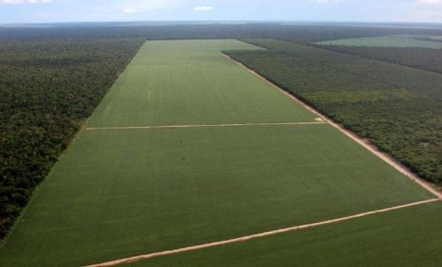 """Brasil avanza en su """"reforma agraria"""" con la expropiación y distribución de tierras"""
