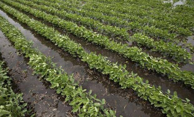 """La """"regadera"""" de El Niño va a potenciar el rendimiento de los cultivos pero también puede generar """"encharcamientos"""" en los lotes."""