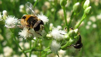 Elaboran el 'quién es quién' de las moscas en campos pampeanos