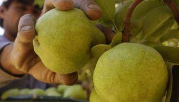 Se invertirán 400 millones de pesos para garantizar la sanidad frutícola en Río Negro