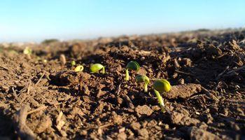 Presentan un biocontrolador fúngico para un manejo sustentable y una buena emergencia del cultivo
