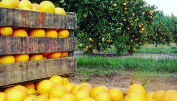 Emergencia citrícola: se reglamentaron los beneficios que alcanzan a 5 provincias