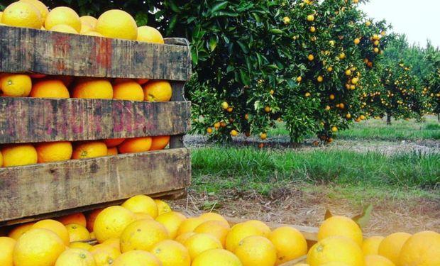 Se reglamentó la emergencia para la cadena de producción de cítricos de las provincias de Entre Ríos, Corrientes, Misiones, Jujuy y Salta.