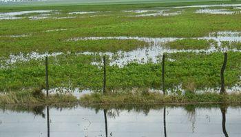 Recomendaciones para acceder a la asistencia por Emergencia Agropecuaria