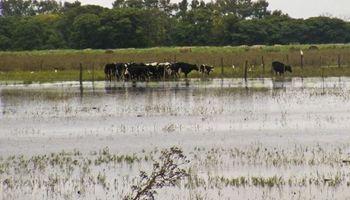 Formosa pedirá que la Nación homologue la emergencia agropecuaria