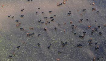 De la Sota firmó la emergencia agropecuaria por inundaciones