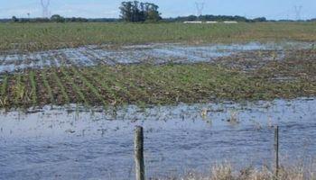 Piden declarar emergencia agropecuaria en Santa Fe