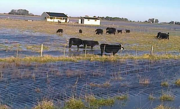 Crecientes fenómenos climáticos vienen afectando al campo.