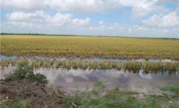 Declaran la emergencia agropecuaria en Santa Fe