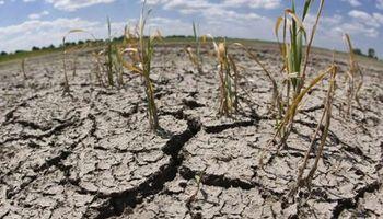 Entre Ríos es la primera provincia afectada por sequía en declarar la emergencia agropecuaria