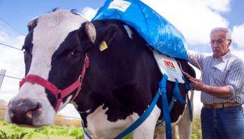 ¿Cómo capturar emisiones bovinas y transformarlas en biogas?