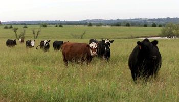 Cómo prevenir el empaste en el ganado