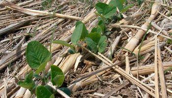 Empresarios agrícolas enterrarán más de US$ 12.000 millones