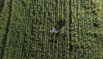 """La actualidad de las empresas agropecuarias: """"Están destinando mucho tiempo a revisar estrategia comercial y financiera"""""""