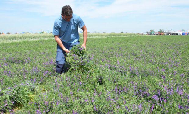 Encuesta a empresarios agropecuarios: a pesar de las adversidades, el campo busca aumentar la oferta de productos
